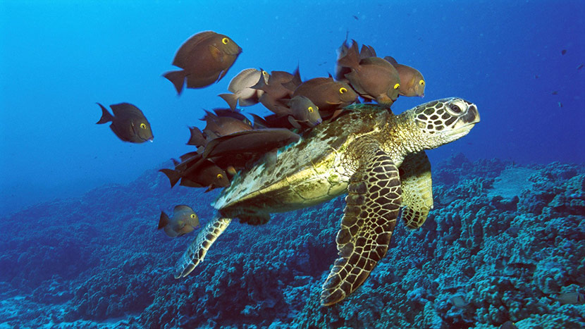 Photo Of A Sea Turtle With Fish Swimming Above It